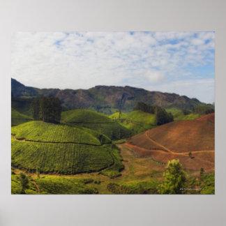 Tea Plantation Kerala state India Poster