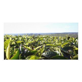 Tea plantation photo greeting card
