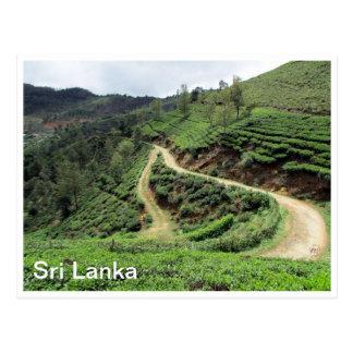 tea plantations sri lanka postcard