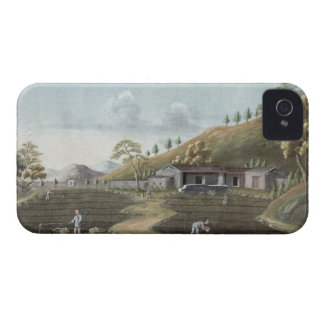 Tea planting (w/c on paper) Case-Mate iPhone 4 cases