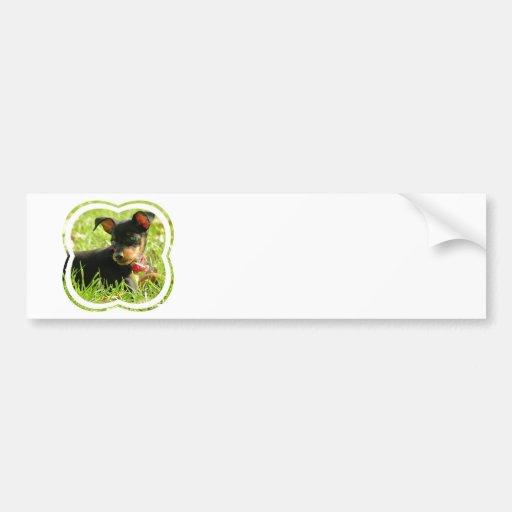 Teacup Chihuahua Bumper Stickers