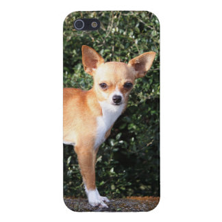 Teacup Chihuahua Puppy iPhone 5 Cover