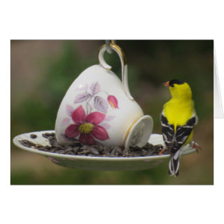 Teacup Finch Card