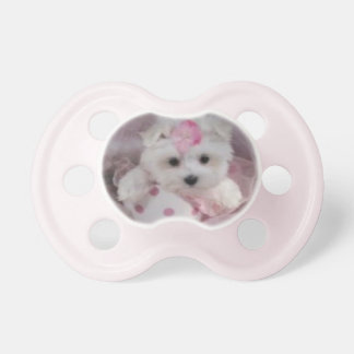 Teacup Maltese Puppy Baby Girl Pacifier