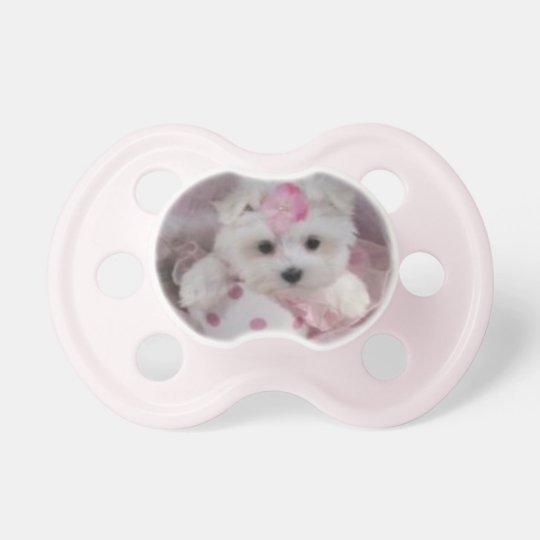 Teacup Maltese Puppy Baby Girl Pacifier