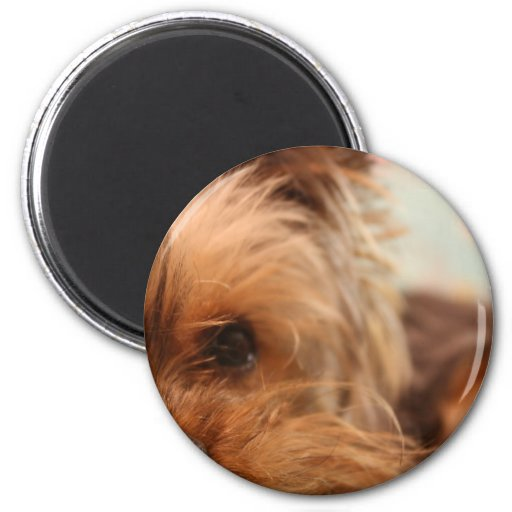 teacup yorkie puppy refrigerator magnets
