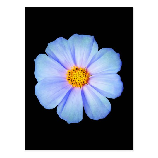 Teal Blue and Purple Daisy on Black Template Postcard