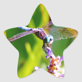 Teal & purple Dragonfly Sticker