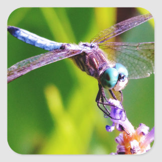 Teal purple Dragonfly Square Sticker