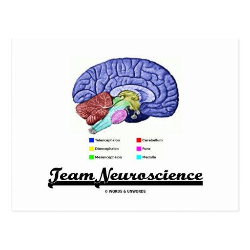 Team Neuroscience (Brain Anatomy Attitude) Post Card