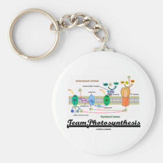 Team Photosynthesis Light-Dependent Reactions Key Chains