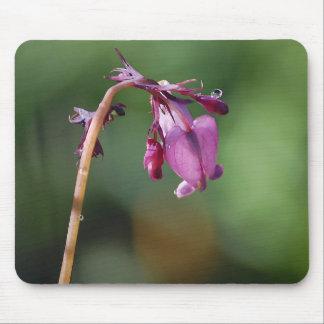 Tears Of A Bleeding Heart Flower Mousepad