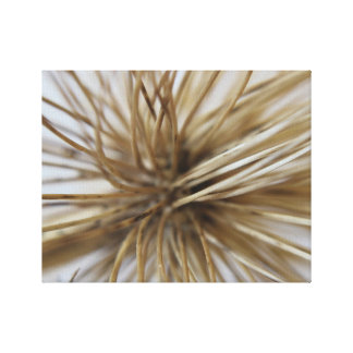 Teasel close-up canvas print