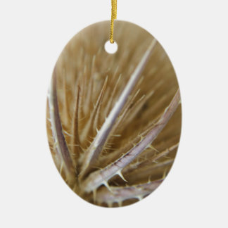 teasel nature photograph christmas ornament