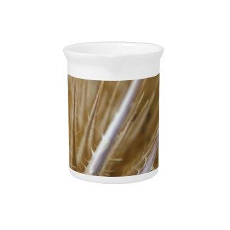 teasel nature photograph pitcher