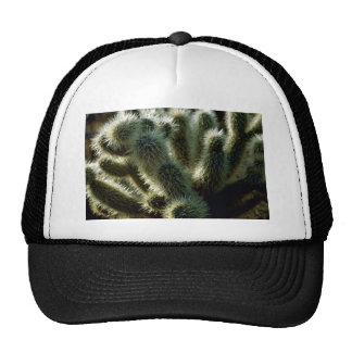 Teddy bear cholla cactus hat