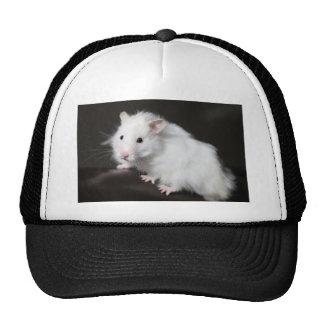 Teddy Bear Hamster Cap