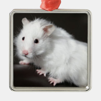 Teddy Bear Hamster Christmas Ornament