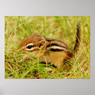 Teeny Tiny Baby Chipmunk Poster