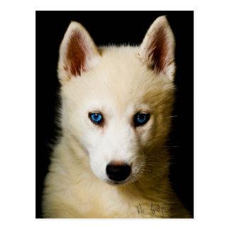 Tehya - Siberian Husky Post Card