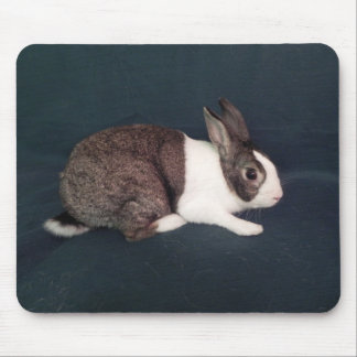 Tejas - Rescue Rabbit in Austin Texas Mouse Pad