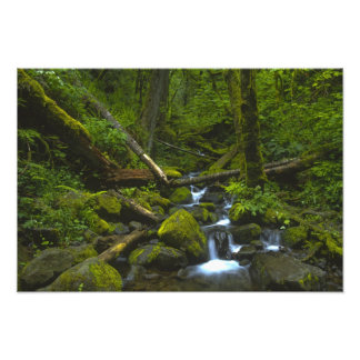 Temperate Rainforest Stream in Columbia River Photo Print