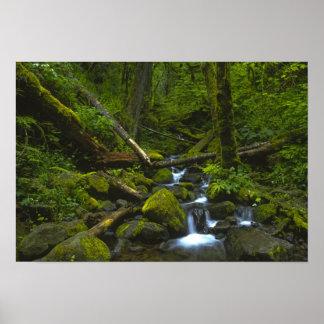 Temperate Rainforest Stream in Columbia River Poster