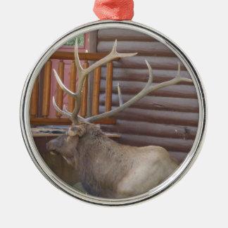 Ten Point Bull Elk Ornament
