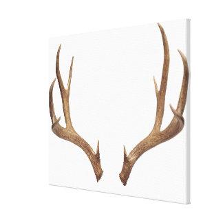 Ten Point Deer Canvas Print