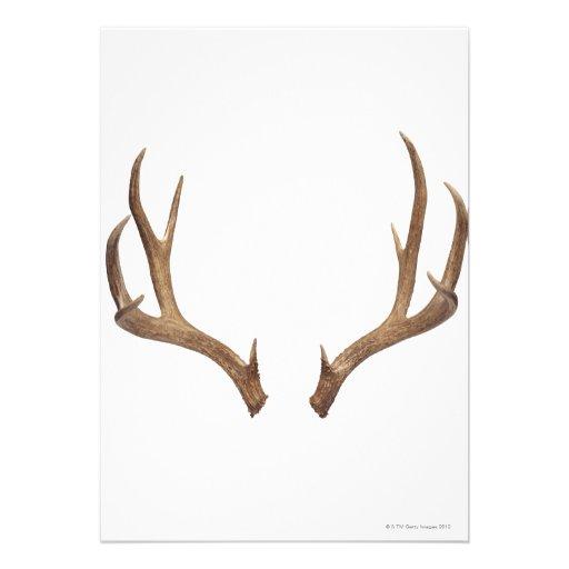 Ten Point Deer Custom Announcements