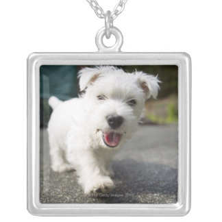 Ten week old female west highland terrier silver plated necklace