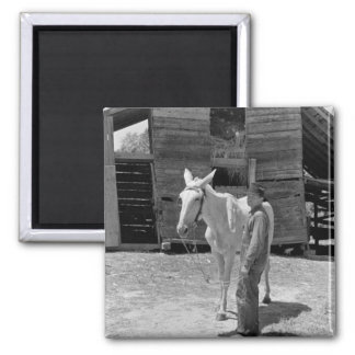 Tenant Farmer s Mule 1930s Fridge Magnet
