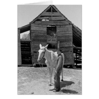 Tenant Farmer's Mule, 1930s Greeting Card