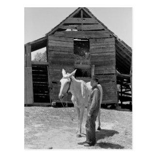 Tenant Farmer's Mule, 1930s Postcard