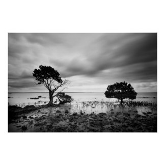 Tenby Point Mangroves Poster