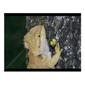 Tenchi (Bearded Dragon) Postcard