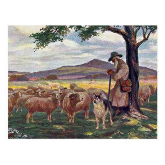 Tending the Sheep Vintage Postcard