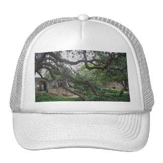 Tendril Tree at the Alamo, San Antonio, Texas Cap
