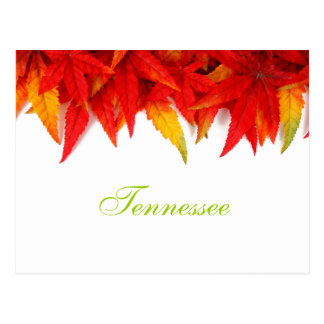 Tennessee Autumn Leaves Postcard