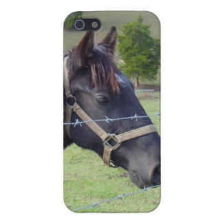 Tennessee Horse2 iPhone 5 Case