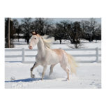 Tennessee Walking Horse in Snow Poster