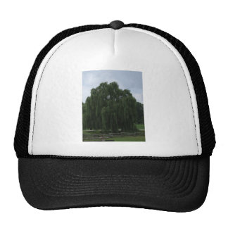 Tennessee Willow Tree Cap