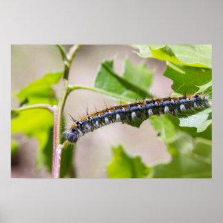 Tent Caterpillar on an Oak Tree Poster