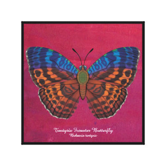 Tentyris Forester Butterfly Canvas Print
