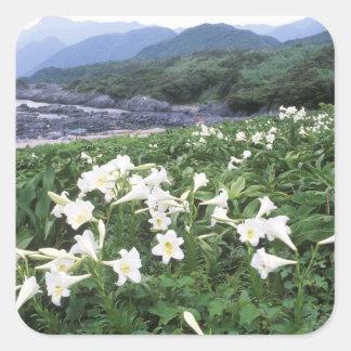 Teppo Yuri (Lily), Yakushima, Kagoshima, Japan Square Sticker