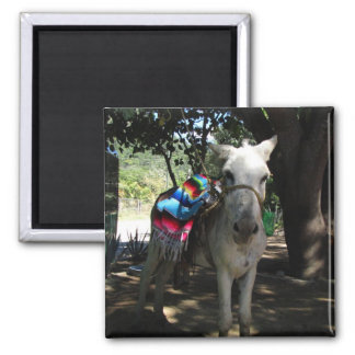 Tequila Donkey Square Magnet