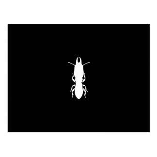 Termite Postcard