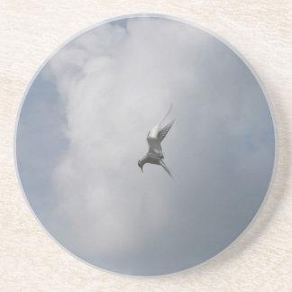 Tern in the sky coaster