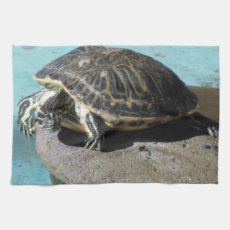 Terrapin on a stone kitchen towel