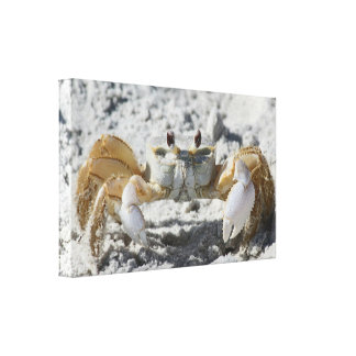 Terrestrial Crab on the Sand Wrapped Canvas